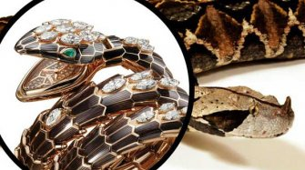 Serpenti, the jewellery watch with fangs! Trends and style