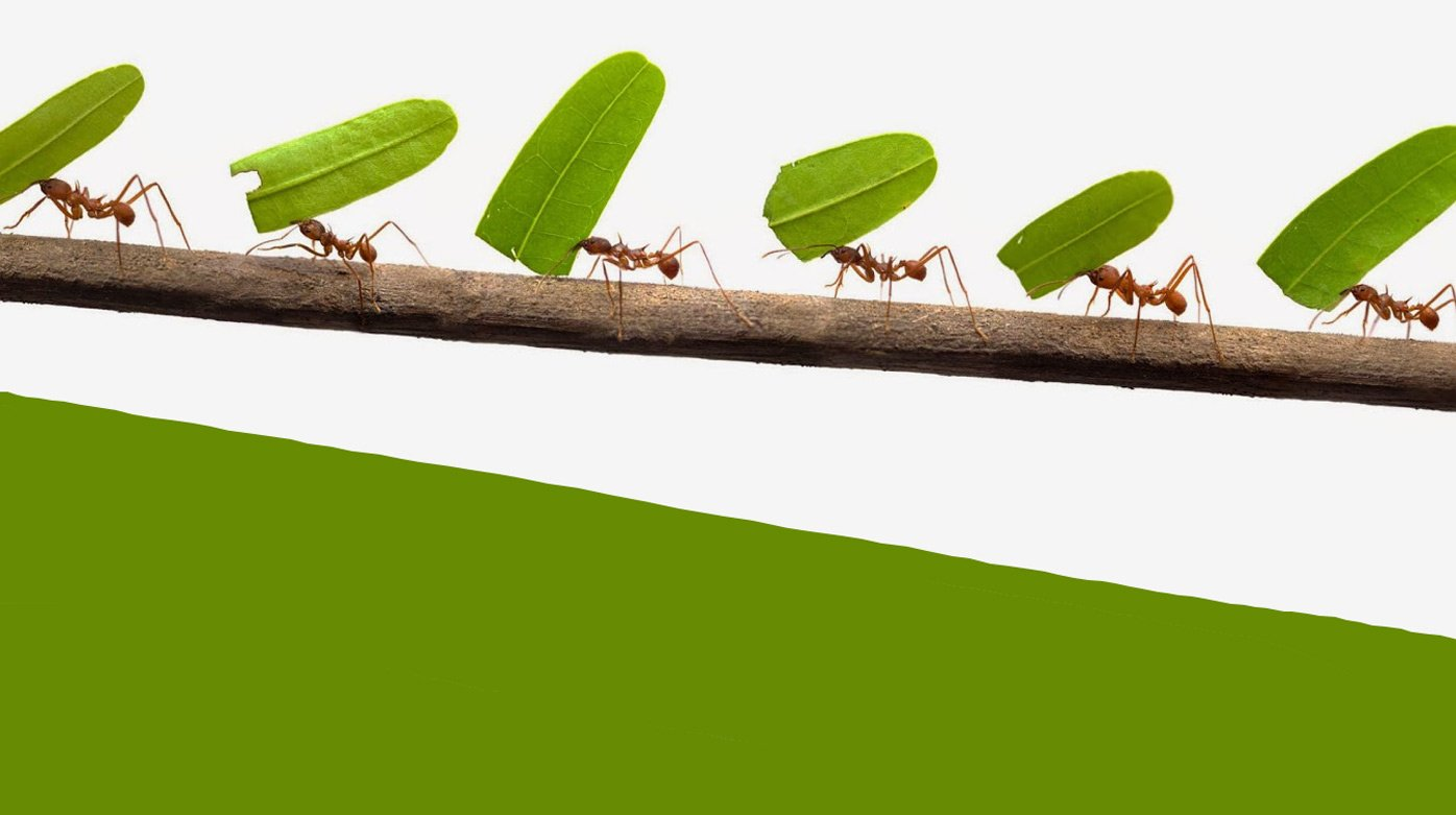 Editorial - An ant among the giants shows the way forward