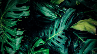It's Not Easy Being Green — Or Is It? Arts and culture