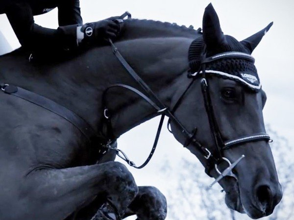 Longines - Video. Show Jumping 2014