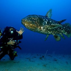 """Laurent Ballesta with one of the """"living fossils"""" during the Gombessa I expedition. © Laurent Ballesta-Projet Gombessa-Blancpain"""